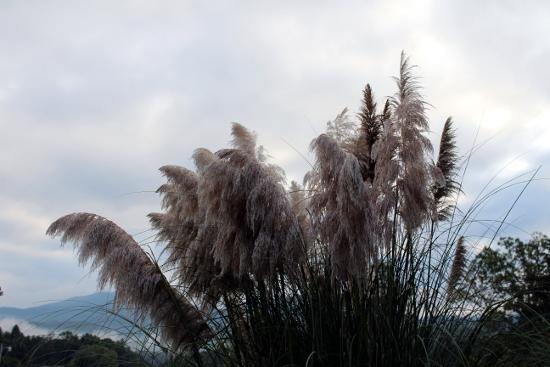 Grassy Flowers Sky