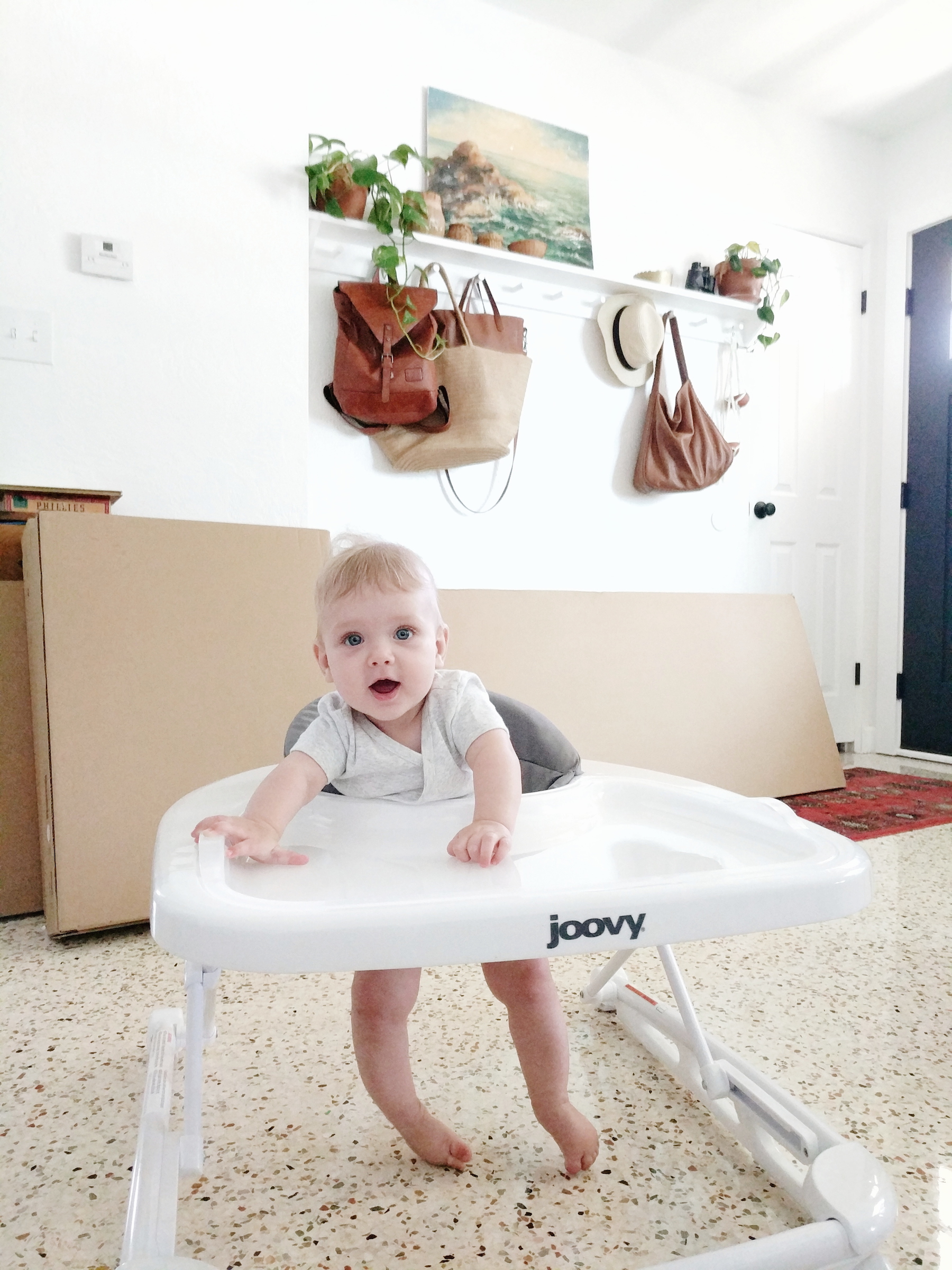 Six month old Joovy Walker